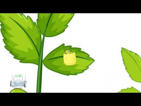MADRASA -  Miracles - The Caterpillar - B13   English