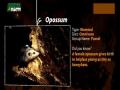 Animal Facts - Opossum - English