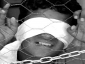 [Remember Palestine] Israelis kidnap children in West Bank and Jerusalem - 04Jun2011 - English