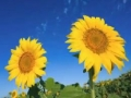 Sneak peek of new Adobe Photoshop CS5 technologies - English