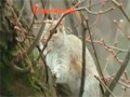 Squirrels who Fast too - Animal Instincts - English