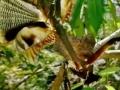 [3/3] Documentary - Praying Mantis - English