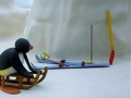 Kids Cartoon - PINGU - Pingu Plays Hide And Seek - All Languages Other