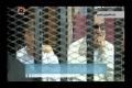 [11 June 13] Egyptian court orders release of Mubaraks sons - Urdu
