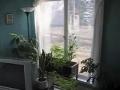 Shrink wrap windows for winter English