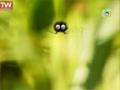 [02] [Cartoon] Minuscule -  Catapulte داستان حشرات - All Languages