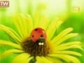 [04] [Cartoon] Minuscule - la coccinelle داستان حشرات - All Languages
