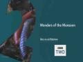Monster leech swallows giant worm - English
