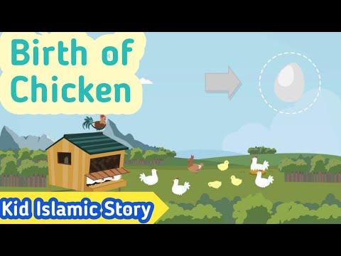 Kids Islamic Stories   Birth of Chicken   Muslim   Kaz School   English