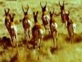 Triumph of the herbivores - Life of Mammals - English