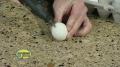 [Science Experiment] Folding Egg - English